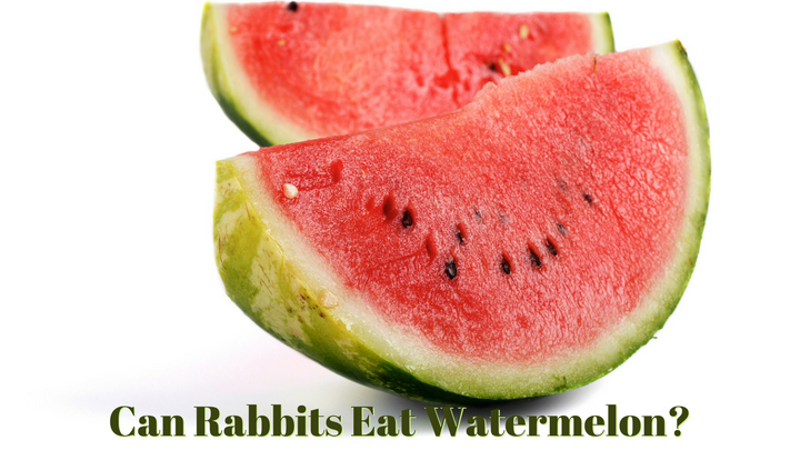 Can rabbits eat watermelon rabbit safety for What parts of a watermelon can you eat